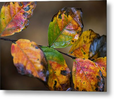 Turning Leaves Metal Print by Stephen Anderson
