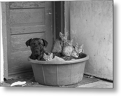 Unlikely Friends Metal Print