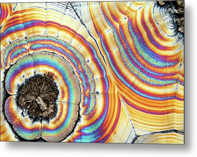 Vitamin C Birefringence Metal Print by Karl Gaff