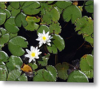 Metal Print featuring the photograph 2 Water Lily by Robert Nickologianis