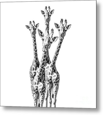 What Are You Looking At?  Metal Print by Diane Diederich