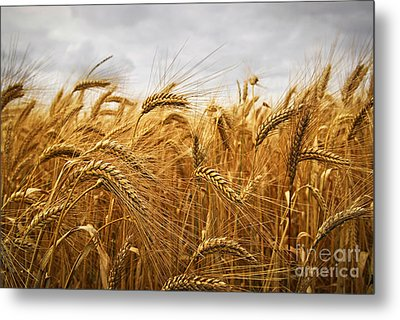Wheat Metal Print by Elena Elisseeva