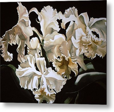 white Cattleya orchids Metal Print by Alfred Ng