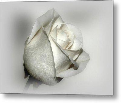 White Rose Metal Print by Sandy Keeton