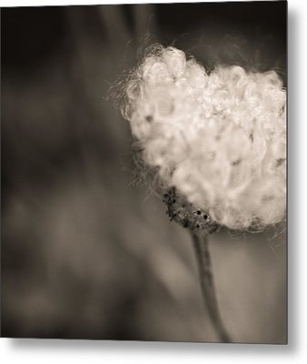 White Whisper Metal Print by Sara Frank