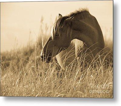 Wild Horse On The Beach Metal Print by Diane Diederich