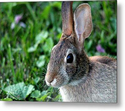 Wild Rabbit Metal Print by J McCombie