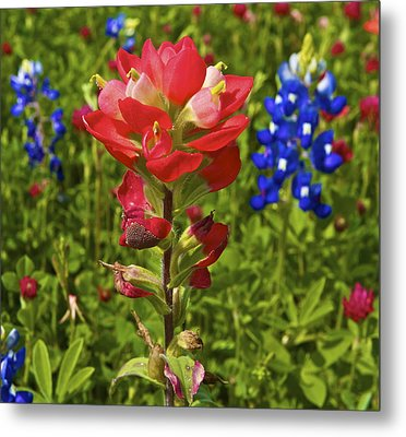 Metal Print featuring the  Wildflowers by John Babis