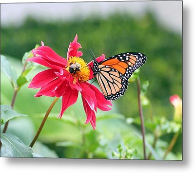 Metal Print featuring the photograph Working Together by Karen Silvestri
