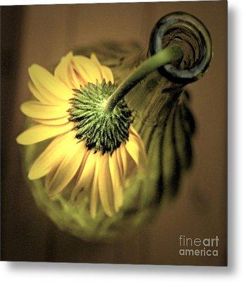 Yellow Metal Print by Amanda Barcon
