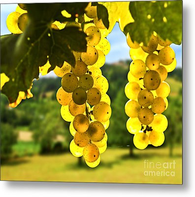 Yellow Grapes Metal Print by Elena Elisseeva