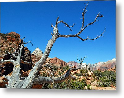 Zion Reaching Tree Metal Print