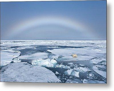 Norway, Svalbard Metal Print by Jaynes Gallery