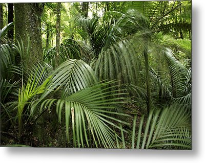 Jungle Metal Print by Les Cunliffe