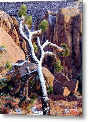 Usa, California, Joshua Tree National Metal Print by Jaynes Gallery