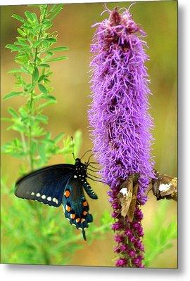 237 Butterfly Metal Print