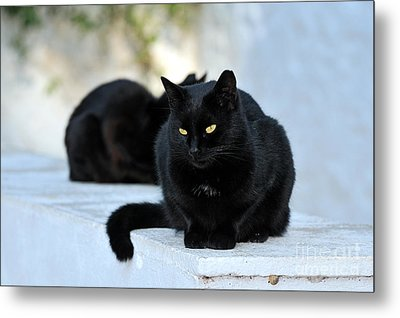 Cat In Hydra Island Metal Print by George Atsametakis