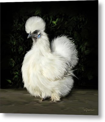 24. Tiny White Silkie Metal Print
