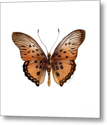 26 Trimans Butterfly Metal Print by Amy Kirkpatrick