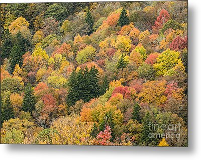 2682 Blue Ridge Parkway Metal Print