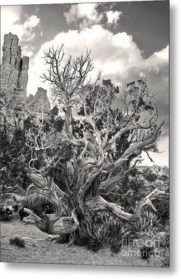 Sedona Arizona Metal Print by Gregory Dyer