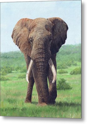 African Elephant Metal Print by David Stribbling