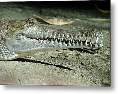 Alligator Camouflage Metal Print