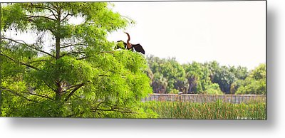 Anhinga Anhinga Anhinga On A Tree Metal Print by Panoramic Images