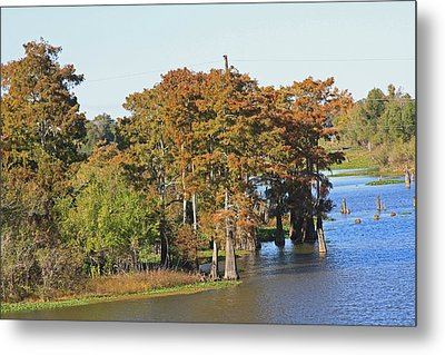 Atchafalaya Basin In Louisiana Metal Print