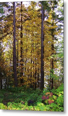 Autumn 5 Metal Print by J D Owen