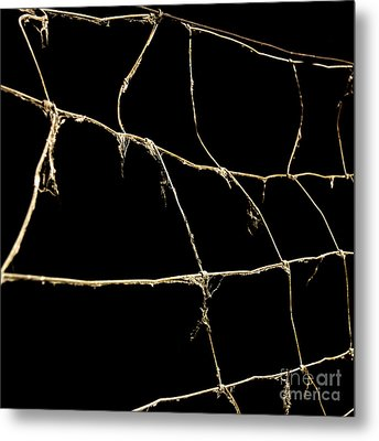 Barbed Wire Metal Print by Bernard Jaubert