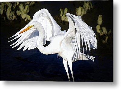 Beautiful Great White Egret Metal Print by Paulette Thomas