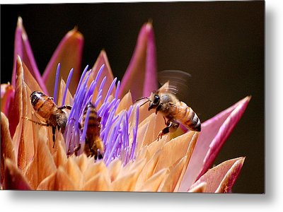 Metal Print featuring the photograph Bees In The Artichoke by AJ  Schibig