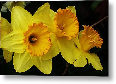 3 Blossoms In A Row Metal Print by Bruce Bley