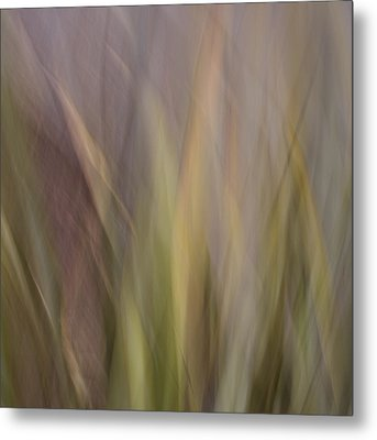 Blurscape Metal Print by Dayne Reast
