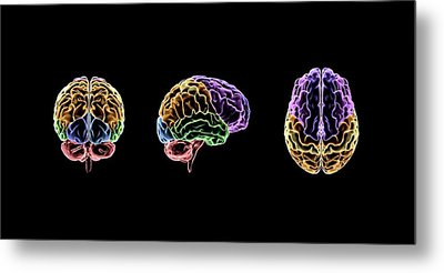 Brain Metal Print by Sci-comm Studios