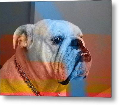 Bulldog  Metal Print by Marvin Blaine
