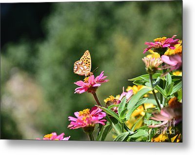 Butterfly Metal Print by Sylvie Leandre