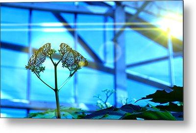 Butterfly Tree Metal Print by Shawn MacMeekin