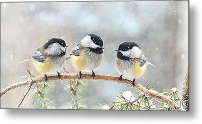 3 Chickadees On A Snowy Day Metal Print