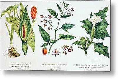 Common Poisonous Plants Metal Print by English School
