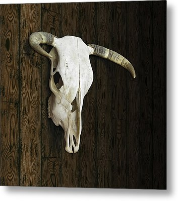 Cow Skull Metal Print by James Larkin