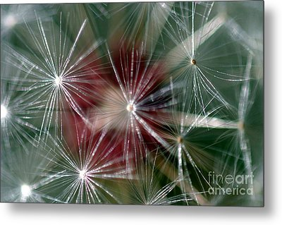 Metal Print featuring the photograph Dandelion Seed Head by Henrik Lehnerer