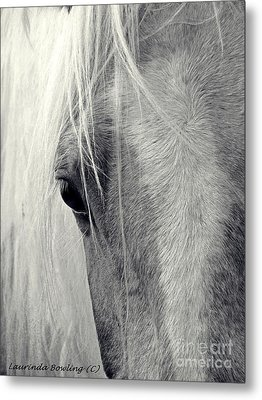 Equine Study Metal Print by Laurinda Bowling