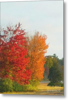 Fall Leaves Metal Print by Rose Wang
