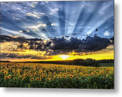 Field Of View Metal Print by Chris Austin