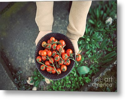 Fresh Tomatoes Metal Print by Mythja  Photography