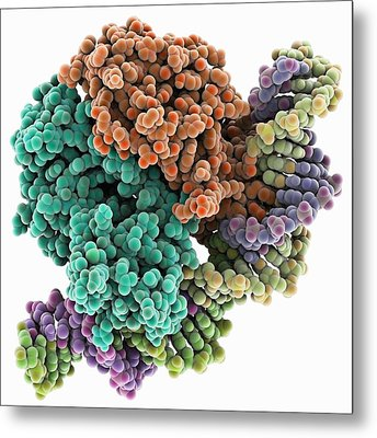 Gene Activator Protein Metal Print by Science Photo Library
