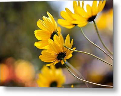 Golden Metal Print by Katherine White