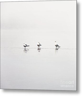 3 Gulls Metal Print by Sylvia Cook